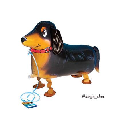шар собака