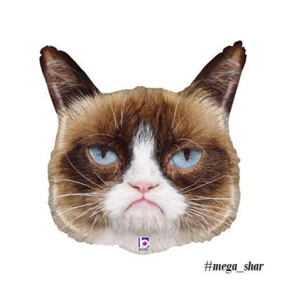 шарик недовольный кот